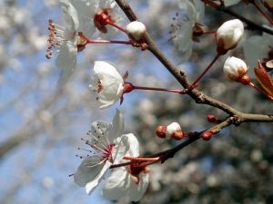 Door to spring: Ahhhh, lovely.