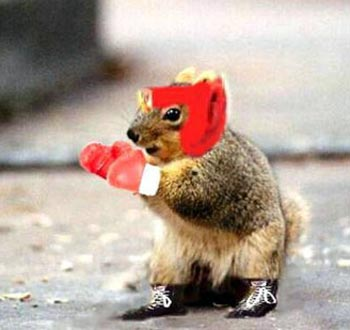 http://gooddeedaday.files.wordpress.com/2009/12/boxing_squirrel.jpg?w=350&h=330