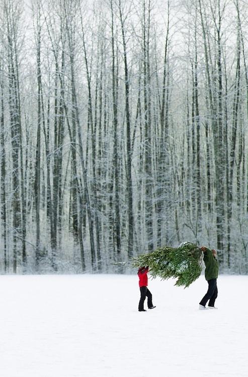 Tree71846556526950148_4qkMYEug_c